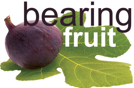Bearing Fruit: A Ministry Of Evangelism & Growth